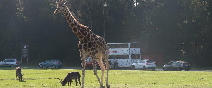 Serengeti Park und Campingpark Hüttensee in der Lüneburger Heide